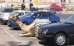 CamelParking